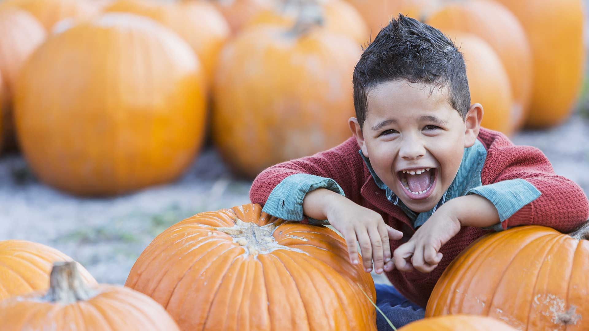 The best pumpkin patches in the Greater Sacramento area